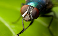 Mosquito em alta definição
