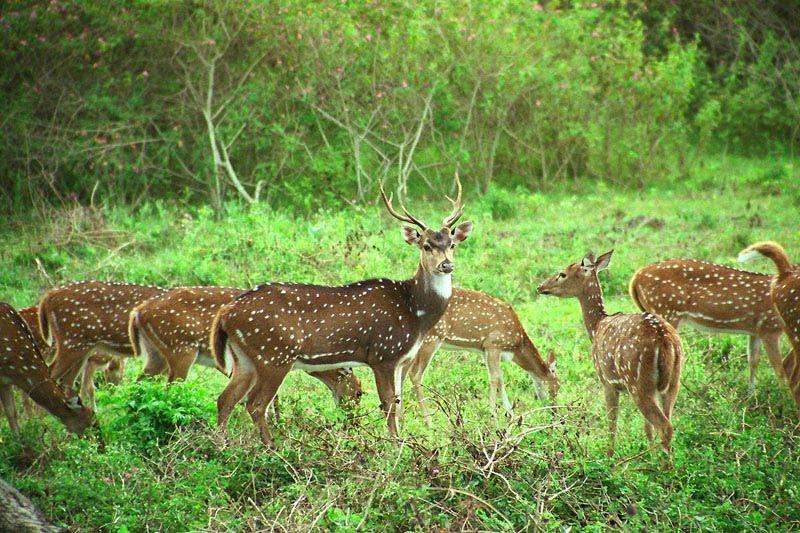 Image result for mudumalai wildlife sanctuary