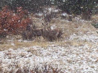 More deer