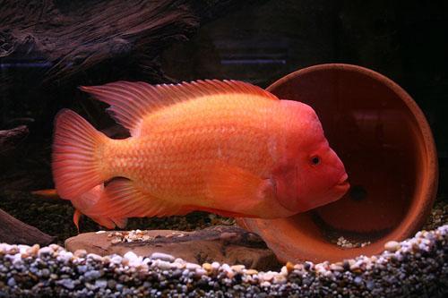 Todo sobre los peces a que llamamos peces for Peces que no necesitan oxigeno