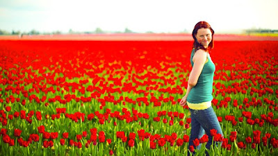 The Skagit Valley Tulip festival near mount vernon, washington.  Wa tulip fields field april, may