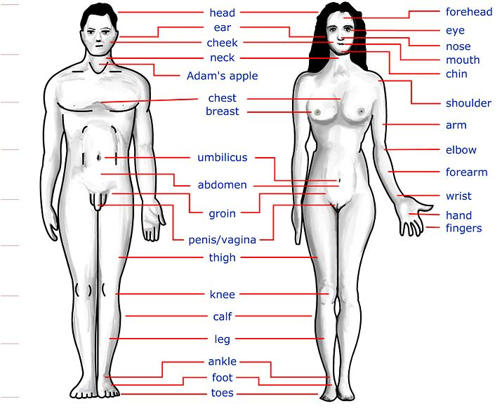 Human+body+diagram+with+names