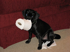 Pepper With Toilet Paper