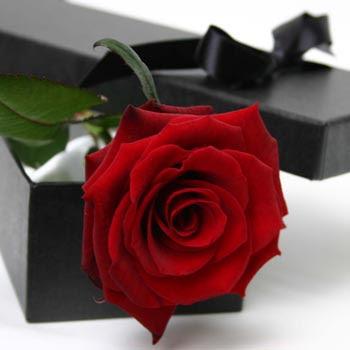 اجمل مافي الكون Single_Red_Rose_lg.jpg