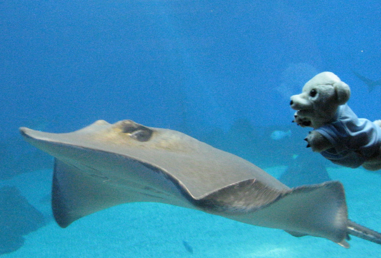 Displaying 20 gt  Images For - Hammerhead Shark Eating A Stingray   Hammerhead Shark Eating Fish