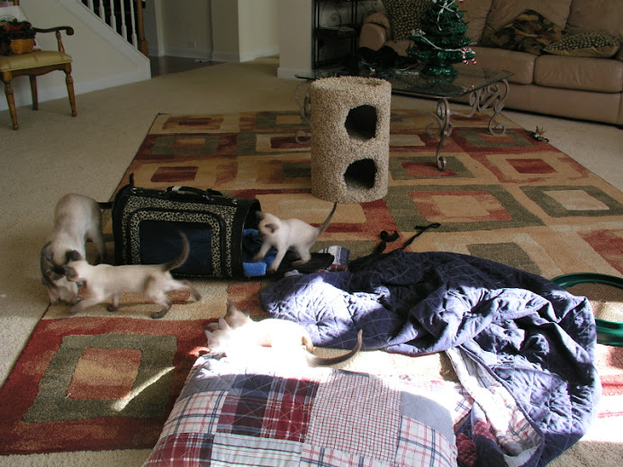 December 17th, 2007  - getting ready for a trip to the vet