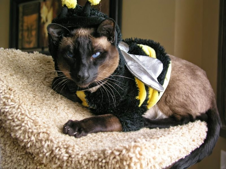 Mr. Andre the Bumble Bee
