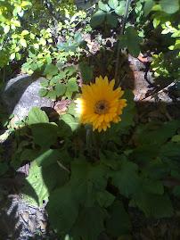Flor da Amizade