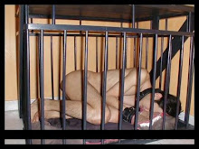 Dog sleep in a cage.