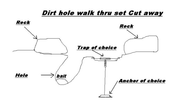 trapping supplies review  diagrams of basic bobcat sets