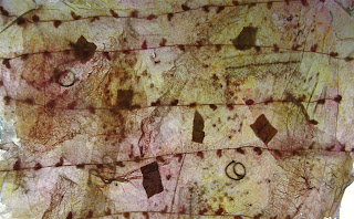 Organa-Tissue Fabric Paper 3