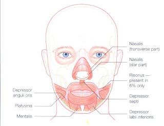Depressor anguli oris botox