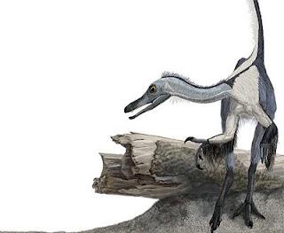 Reconstrucción de Haplocheirus soller'. Portia Sloan