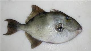 A los peces tropicales les gusta el Mediterráneo