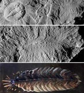Uno de los fósiles más extraños del mundo