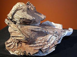 Fósil del Seitaad ruessi. Museo de Historia Natural de la Universidad de Utah