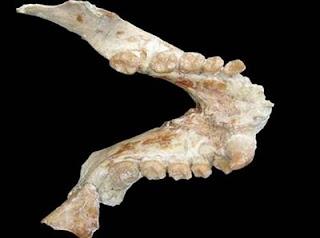 Descubren un primate de más de 11 millones de años. Alba et al.
