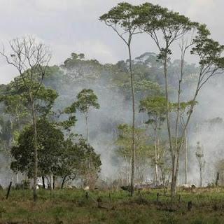 La selva amazónica. AP