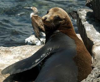 Especies invasoras amenazan la riqueza de las islas Galápagos