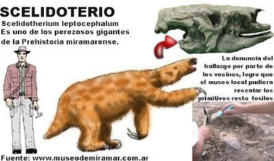 Vecinos y turistas hallan importantes restos fósiles en Miramar