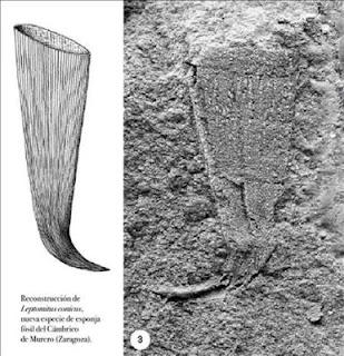 Encuentran en Murero nuevas especies marinas de hace 530 m. a.