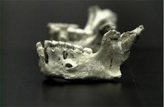 Mandíbula de neandertal de El Sidrón. EFE