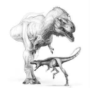 El pequeño Raptorex y su descendiente, el Tyrannosaurus rex / Todd Marshall