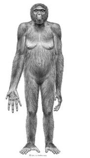 Representación del Ardipithecus ramidus - SCIENCE