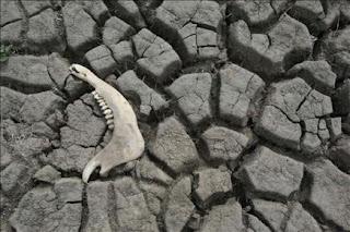 La sequía azota al 90 por ciento del territorio argentino