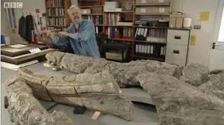 Los restos del gigante marino. BBC