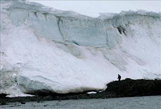 Las palmeras cubrían el Ártico hace 53 millones de años. Foto EPA