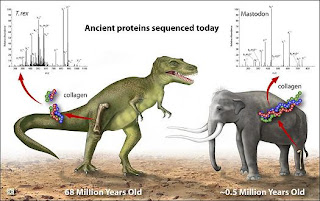 Confirman la relacion de los dinosaurios con las aves
