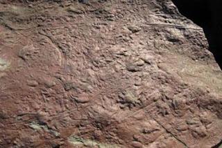 Las huellas de reptil más antiguas
