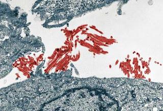 El virus de la gripe A podría usar un 'truco' bioquímico para replicarse