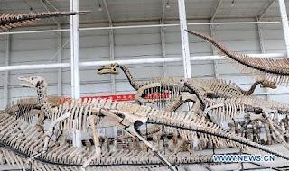 Hallan nueva especie de dinosaurio en China: Sinoceratops Zhuchengensis