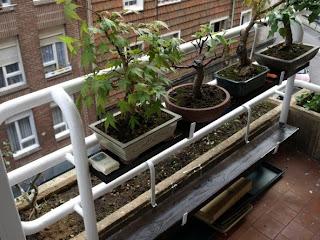 Bonsai amateur poco espacio para tus bonsai for Estanterias para bonsais