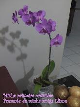Minha primeira orquidea .