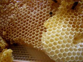 [Honey_comb.jpg]