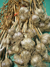 Chesnook Red Garlic