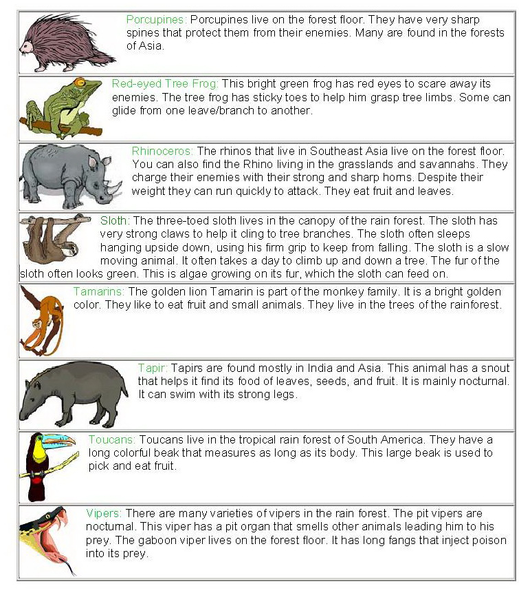 Facts Animals in The Rainforest images