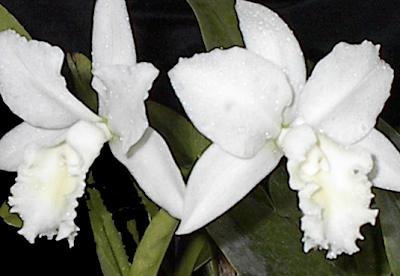Sonoma Wedding Floral Designer