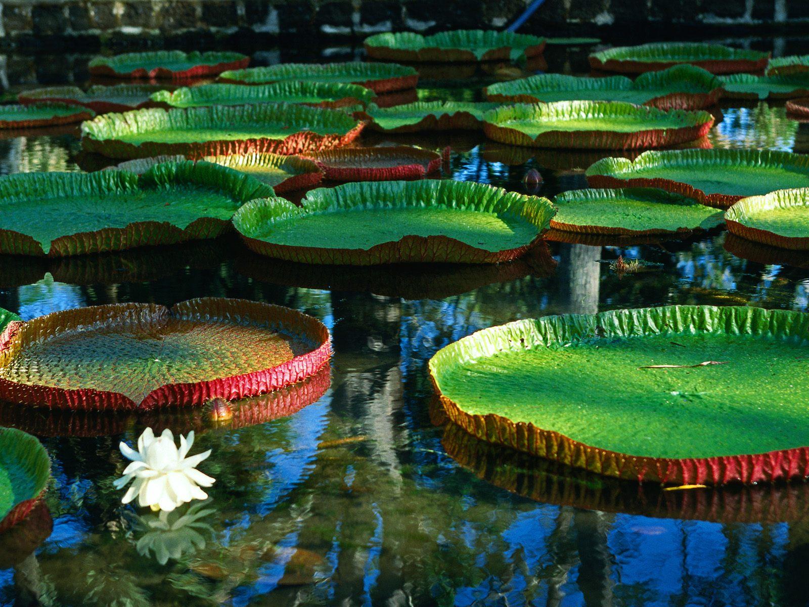 http://1.bp.blogspot.com/_D6V8KS70KD8/TJsgYW4iihI/AAAAAAAACqU/QNtjJmTieWw/s1600/Water_Plant_and_Lily_Flower.jpg