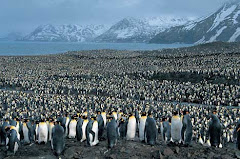 Kings of Antarctica