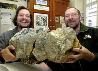 海洋暴龍 海洋暴龍化石