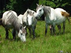 Adjátok vissza a lovainkat!