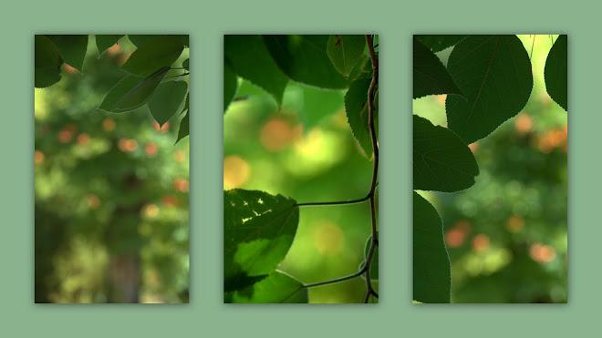 Farm trees1