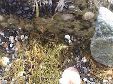 Bajo la roca sola,