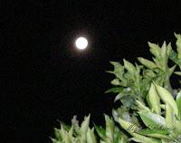 Luna llena 2009 a la vera de un naranjo