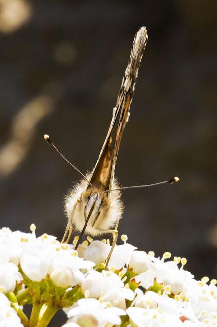 Habitantes do Parque da Paz 3, Almada - 2010, Ano Internacional da Biodiversidade