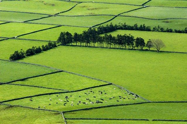 Verde!!! - Ilha Terceira, Açores